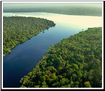 保護森林イメージ